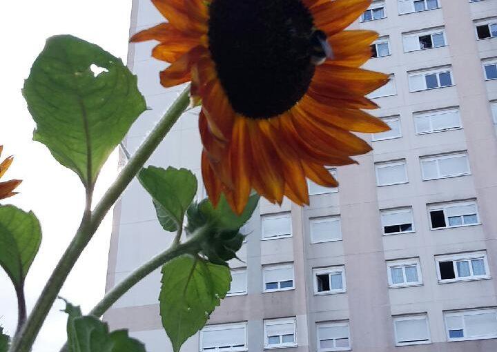 En attendant l'été au jardin de la tour