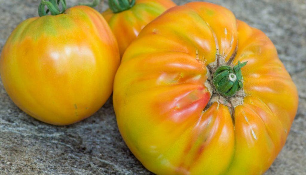 Bourse aux plantes : Tomate HillBilly