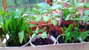Bourse aux plantes- Petites annonces de jardinier/e @ jardin de la Tour