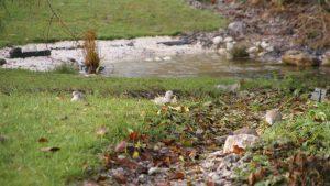 Sortie Visite du jardin de la Selle @ jardin  de la Selle