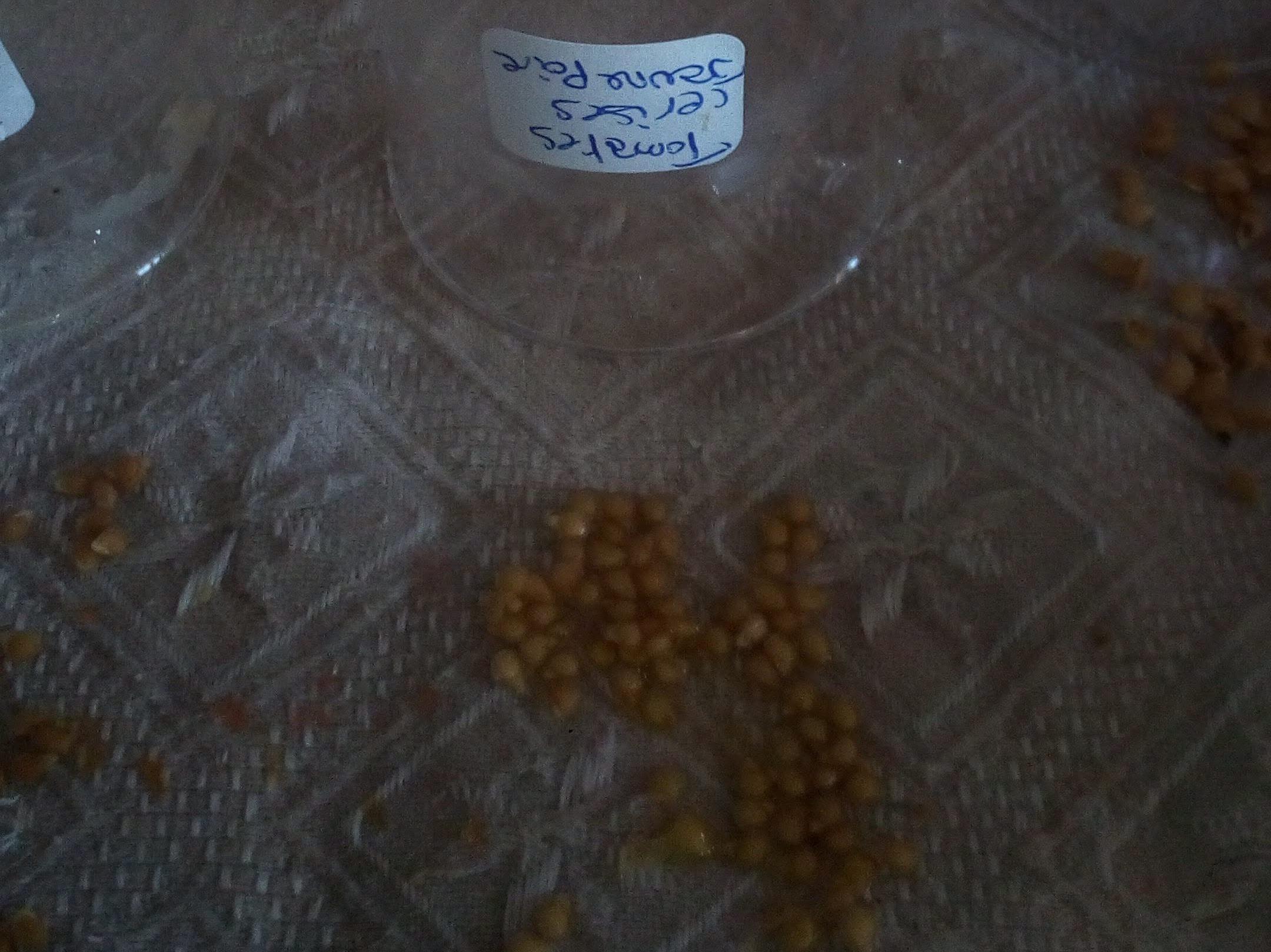 Séchage des graines sur torchon