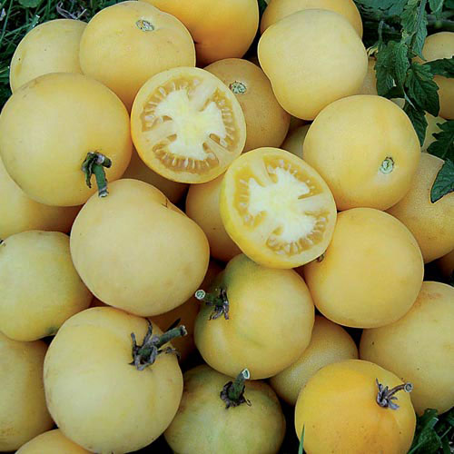 Bourse aux plantes : Wapsipinicon peach