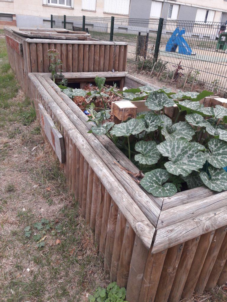 courges dans le compost